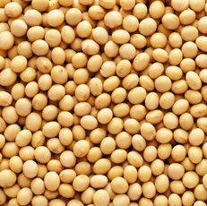 agen kacang kedelai impor Jatinegara